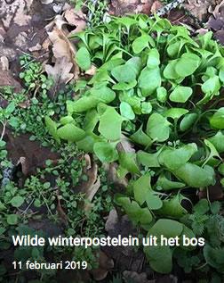 www.ikeetgezond.nl