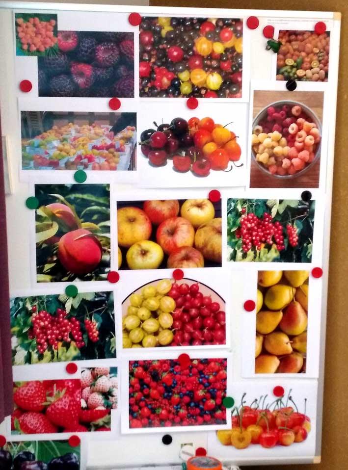 Fruit in de tuin