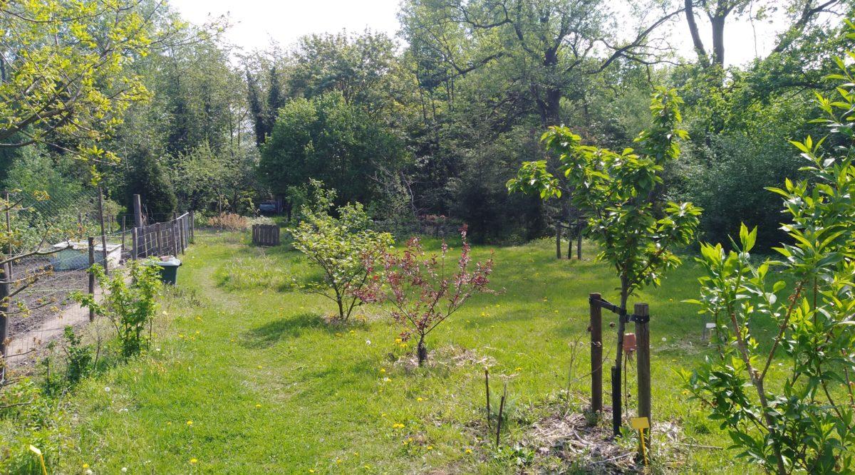 Lesdag 1: Introductie; Natuurlijke en eetbare tuin