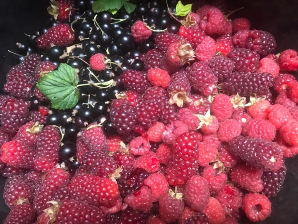 Lesdag 6:  Fruit, keukenkruiden en bloemen in de tuin