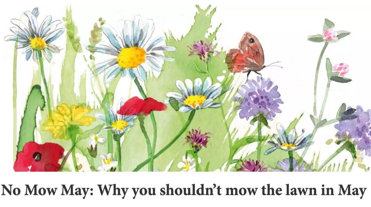 'No mow may'